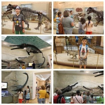 в Музее естественной истории Татарстана