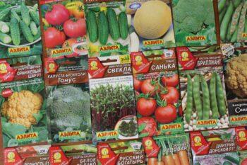 Семена от ООО «Агрофирма АЭЛИТА»